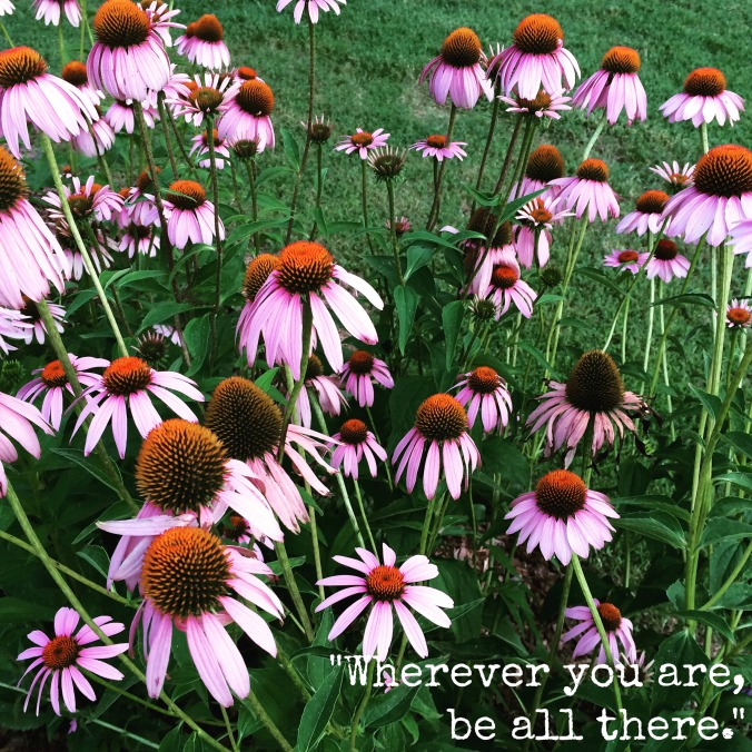 my purple coneflowers 2015 - jim elliot quote